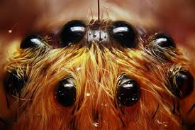 what do spider look like how many does a spider