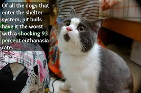 Omg Cat Meme - omg cat is shocked by these facts about animal homelessness one
