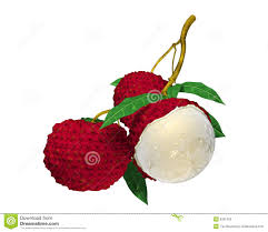 lychee fruit candy lychee clipart lychee fruit pencil and in color lychee clipart