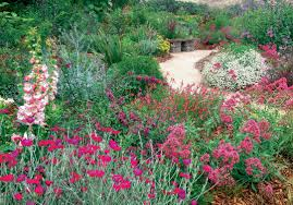 plants native to mexico pacific horticulture society our plant collection is for the