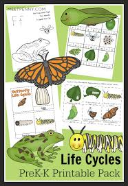 frog and butterfly life cycles prek k printable pack frog life