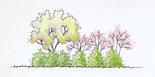 landscape design trees at arborday org