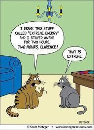 Cartoon Cat Memes - lolcats insomnia lol at funny cat memes funny cat pictures