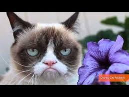Lil Bub Meme - grumpy cat and lil bub finally meet grumpycatvideo grumpy cat
