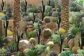 cactus garden designs best decoration backyard cactus garden ideas