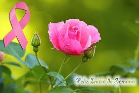 imagenes de feliz inicio de semana con rosas feliz inicio de semana mujer belleza lucha y fuerza pinterest