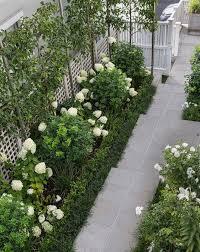 ornamental pleached pears white hydrangea limelight tinakori