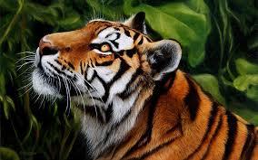 index of misc images on easel tiger jungle