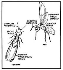 Winged Termites In Bathroom Welcome To Sure Shot Pest Control