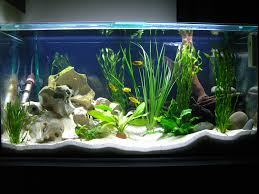 freshwater fish aquarium decorations design interlocking basement