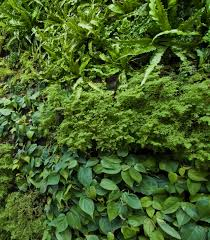 green walls on pinterest vertical gardens texture and google