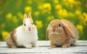 rabbit bunny http images4 fanpop image photos 16400000 bunnies bunny
