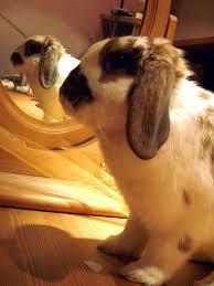 Rabbit Hutch For 4 Rabbits The Lowdown On Rabbit Hutches
