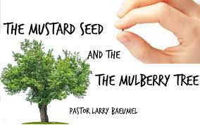 the mustard seed and the mulberry tree