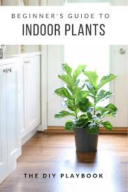 10 best plants images on pinterest plants indoor gardening and