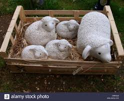 and sheep garden ornaments in a box uk stock photo royalty