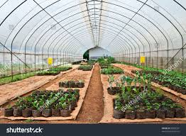 planting modern farm north thailand stock photo 58905331