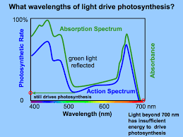 What Color Of Visible Light Has The Longest Wavelength Light