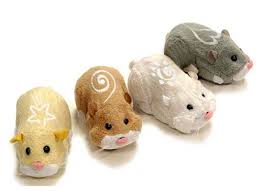zhu zhu pet follow