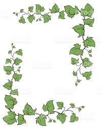 ivy vector hand drawn frame climbing and groundcreeping woody