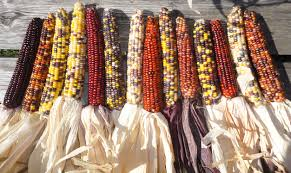 image gallery indian corn