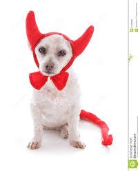 bad dog halloween devil costume royalty free stock images image