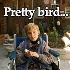 Dumb And Dumber Memes - dumb and dumber on twitter pretty bird http t co dxrdj24edd