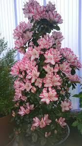 106 besten bonsai gz bilder auf beautiful gardening
