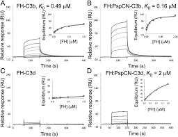 fachhochschule fã r design complement evasion mediated by enhancement of captured factor h