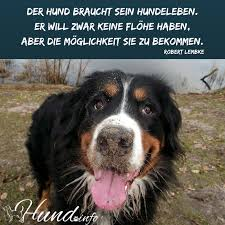 sprüche hund treue hundesprüche hunde