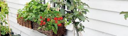 Flowers For Window Boxes Partial Shade - window box gardening from suttons seeds