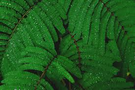 Free Picture Leaf Nature Fern Free Images Tree Nature Forest Dew Leaf Flower Green Jungle