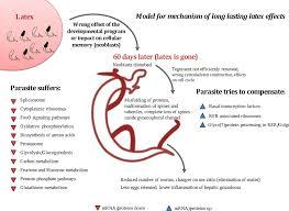 double impact natural molluscicide for schistosomiasis vector