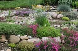 giardini rocciosi in ombra piante perenni per giardino roccioso vivaio le clos d armoise