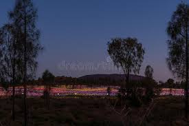 field of light uluru field of light uluru northern territory australia under the s