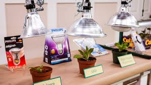 Grow Lights For Plants Plant Grow Lights Home U0026 Family Hallmark Channel
