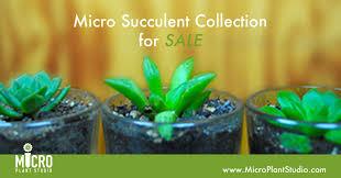 succulent facts micro succulent micro plant studio