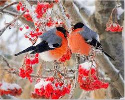Cardinal Bird Home Decor by Compare Prices On Magpie Bird Pictures Online Shopping Buy Low
