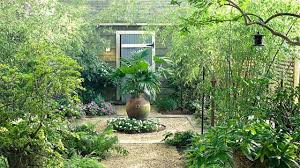 Tropical Plants For Garden - the best tropical plants to grow in your region grow beautifully
