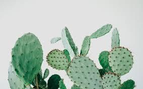 kaktus københavn copenhagen cool hunting