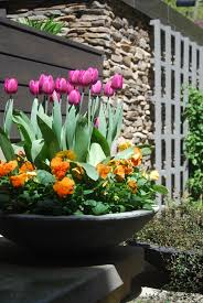 Spring Flower Garden Tulips Perennial Bulbs Container Gardening Landscape