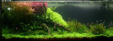 Aquascape Aquarium Plants Carpet Aquarium Plants Or Foreground Aquarium Plants Are These