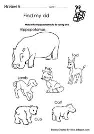 kindergarten worksheet for hippopotamus and its young one