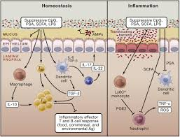 role of the microbiota in immunity and inflammation cell