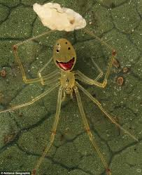 Cute Spider Meme - meet the hawaiian spider that will make you smile daily mail online
