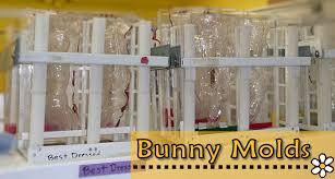 the c shop easter bunnies birch bay