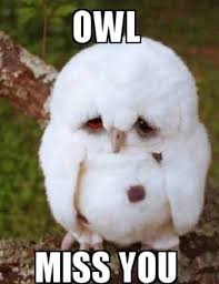 Missing You Meme - meme owl miss you meme owl cute what makes me giggle