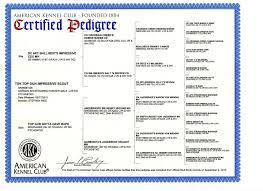 pedigree certificate template free personalised pedigree forms 3