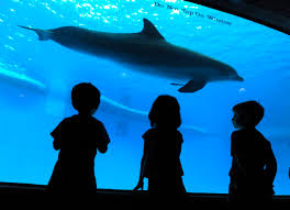 bottlenose dolphins at the national aquarium in baltimore