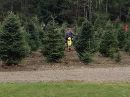 best u cut tree farms near seattle
